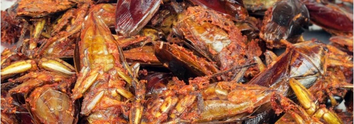 FAO: Gajićemo insekte da bi se prehranili