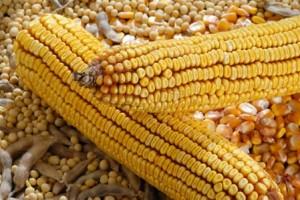 Promet kukuruza dominira, bez soje na tržištu