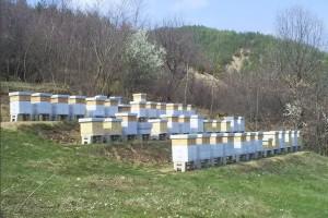 Uz određene uslove stariji pčelari će moći do pčelinjaka