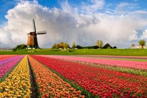 Rekordni izvoz holandskog agrara