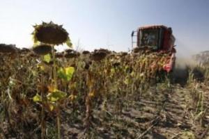 Ratari najavljuju proteste zbog niske cene suncokreta
