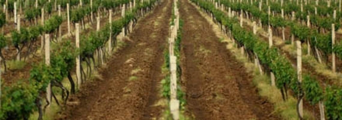 Vranje 2020: Poljoprivreda prva razvojna šansa