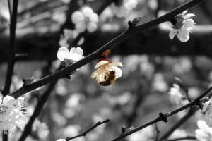 Prskanje voća izaziva pomor pčela