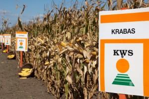 KWS počeo pripreme za izgradnju fabrike za doradu semena