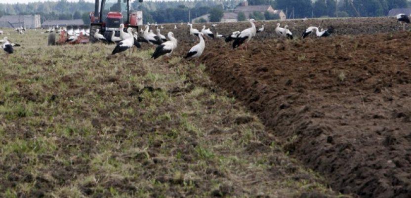 Ratari ukazuju na alarmantnu situaciju u poljoprivredi