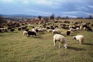 Pirot povećao agrarni budžet