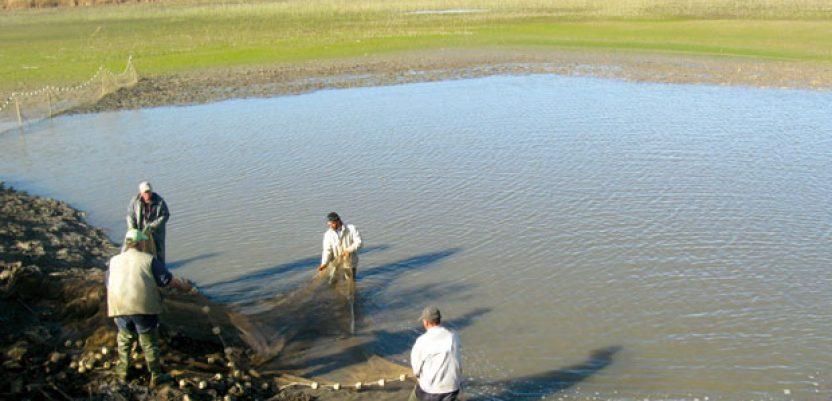 Novci za izgradnju kapaciteta za preradu ribe