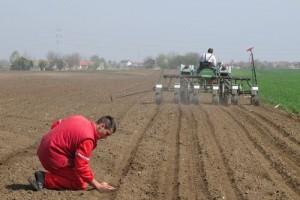 Pažnju posvetiti gustini setve kukuruza