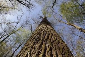 Ima li prostora za nove šume?