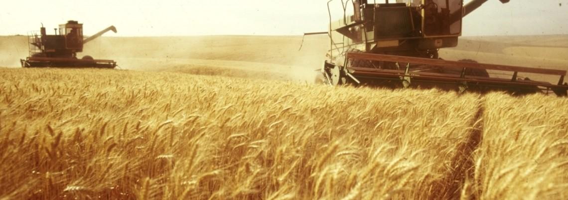 Niko neće ukrajinsko žito