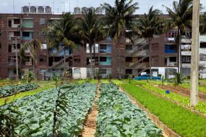 Tržišna ekonomija na mala vrata stiže na Kubu