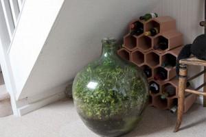 Biljka u zatvorenoj boci stvorila sopstveni ekosistem