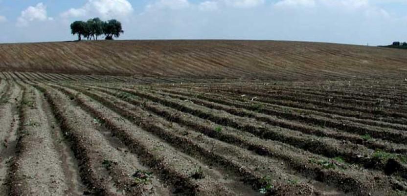 Beograd daje zemljište u zakup