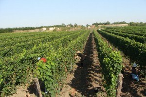 Vojvođanski vinari i vinogradari pod jednim krovom
