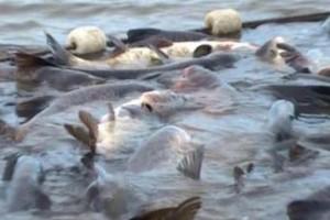 Strogi propisi za izvoz ribe u EU i Švajcarsku