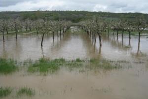 Stručna pomoć poljoprivrednicima sa poplavljenih područja
