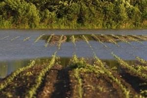 U toku analiza poplavljenog poljoprivrednog zemljišta