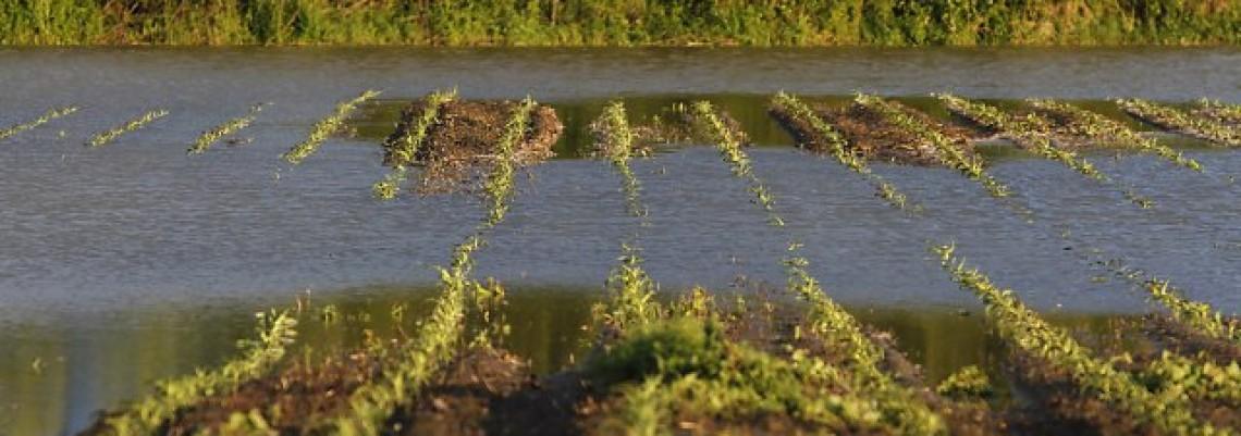 Poplavljeno 90.000 hektara obradivog zemljišta