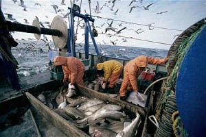Radionica: Pristup tržištu EU i Eko-oznake u ribarstvu i proizvodima akvakulture
