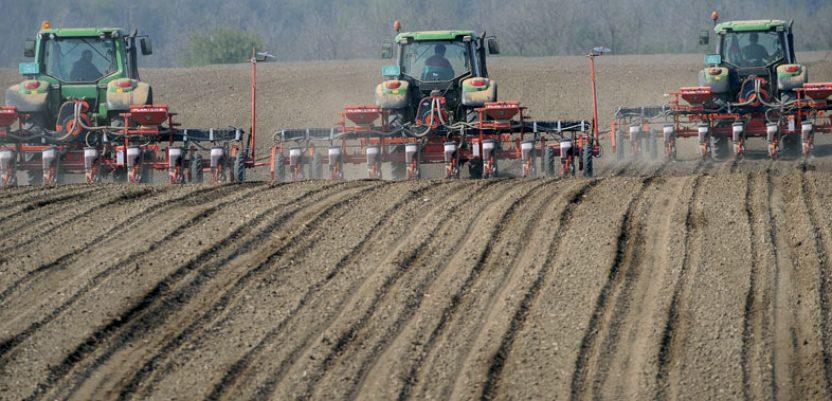 Suša ugrožava nicanje kukuruza, soje i suncokreta