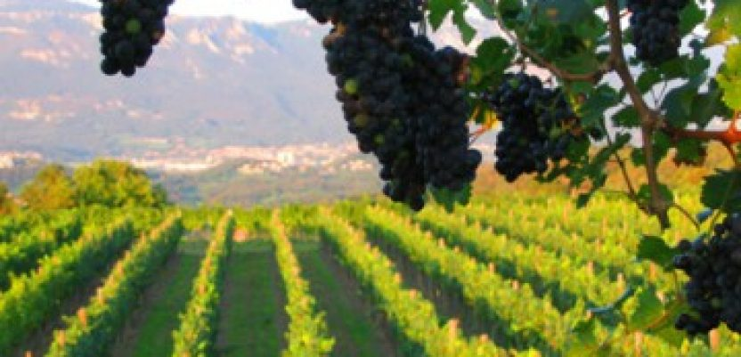 Vlada Srbije podržava razvoj vinskog turizma