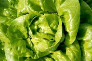 Vreme za setvu zimske salate