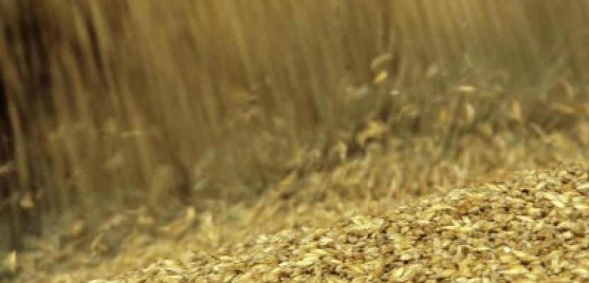 Nove polemike oko cene žita