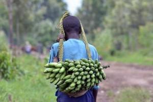 Super banane – spas ili nešto drugo