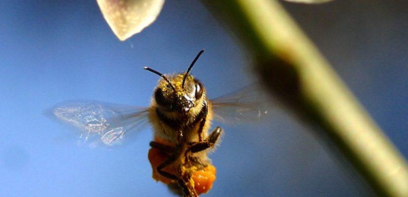 Vreme ove godine nije naklonjeno pčelama
