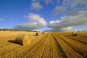 Nemci pomažu projekat biomase
