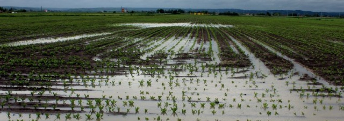 Troškovi za odbranu od poplava 600 miliona dinara