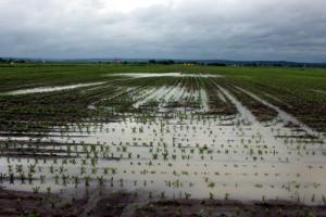 FAO pomaže Srbiji u sanaciji štete