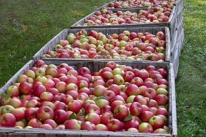 Rusija zabranjuje uvoz voća i povrća iz Poljske
