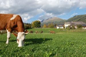Brz rast organske poljoprivrede u EU