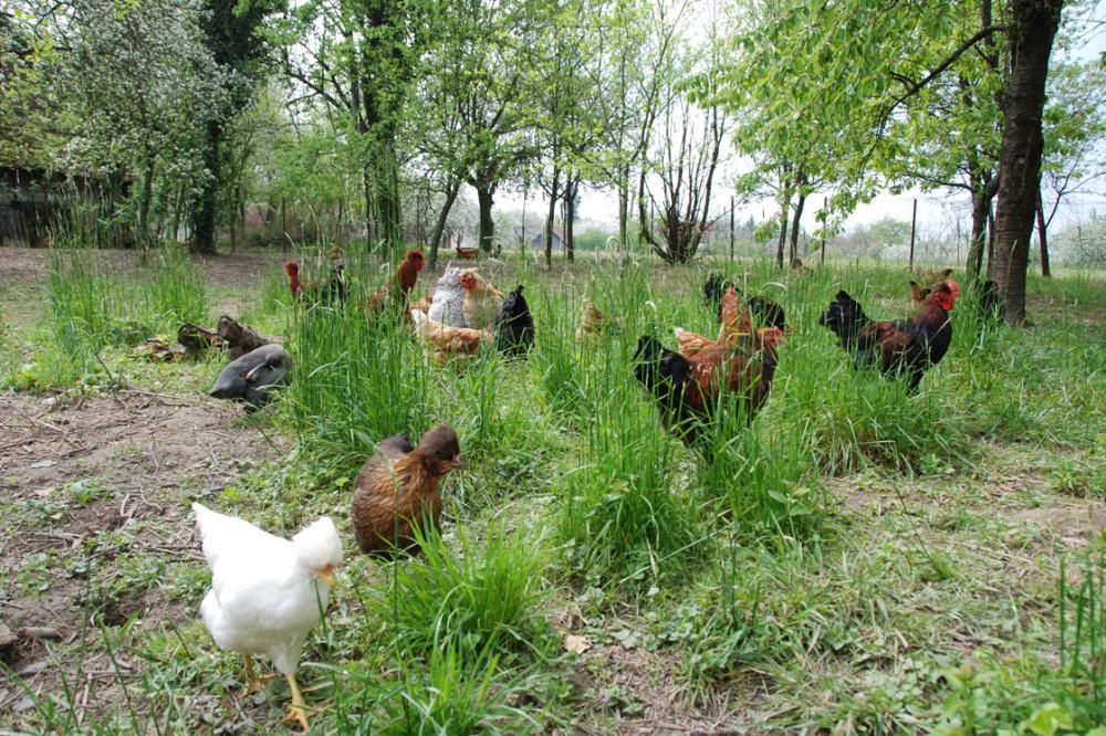 Organski proizvodi u Srbiji na manje od 10.000 hektara