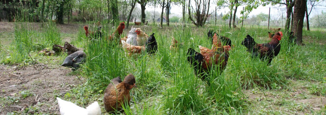 Više hektara pod organskom proizvodnjom