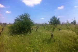 U Srbiji godišnje nestane do 30.000 hektara oranica