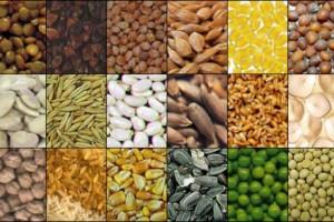 Suficit od 13,2 miliona dolara u izvozu semena