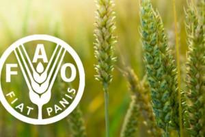 FAO: Pale cene hrane u svetu