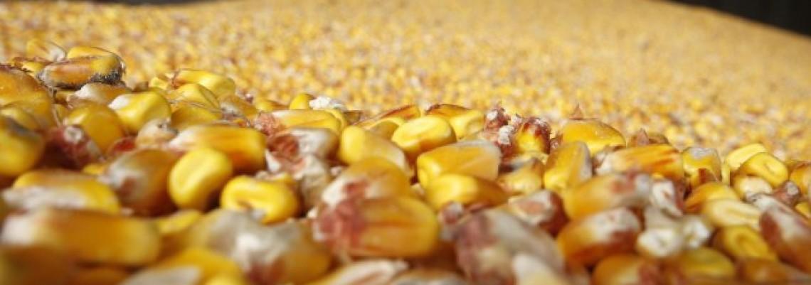 Do kraja godine tri milijarde dolara od izvoza hrane