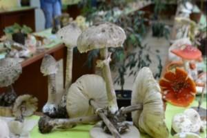 Pronašli 11 retkih gljiva