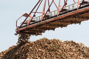 Rod kukuruza i repe rekordan, suncokret podbacio