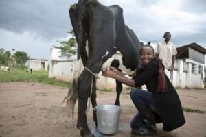Mis Ugande mora da zna da muze krave i čuva ovce