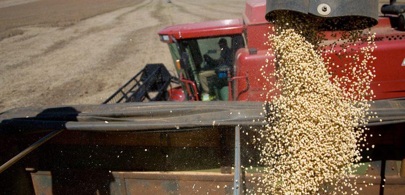 Dobra ovogodišnja cena za soju i kukuruz