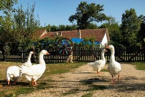 Vojvodini priznanje za unapređenje seoskog turizma