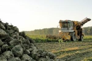 Srbija spala na četiri šećerane