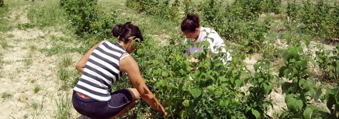HR: Potencijal ekološke poljoprivrede nedovoljno iskorišten