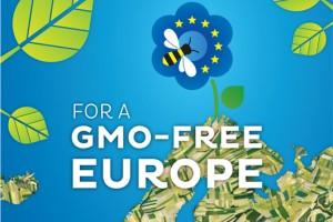 EU: O zabrani GMO odlučuju nacionalne vlade