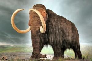 Da li će mamuti ponovo hodati Sibirom?