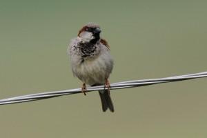 Alarmantni podaci o nestanku ptica u Evropi